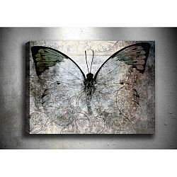 Obraz Tablo Center Fading Butterfly, 70 × 50 cm